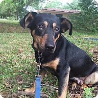 Adopt A Pet :: Heidi - Tampa, FL