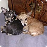 Adopt A Pet :: Pearl & Onyx - Chicago, IL