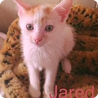 Adopt A Pet :: Jared - Brooklyn, NY