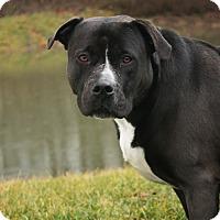 Adopt A Pet :: Lily A34441764 - Westampton, NJ