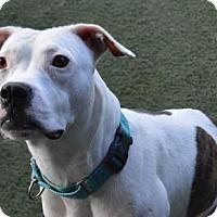 Adopt A Pet :: Queen - Lakeland, FL