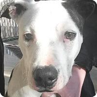 Adopt A Pet :: Alice - Lincolnton, NC