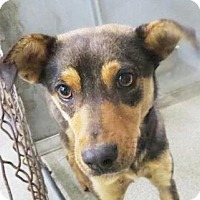 Adopt A Pet :: Mousie - Lincolnton, NC
