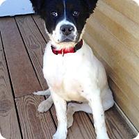 Adopt A Pet :: Tinley - New Oxford, PA
