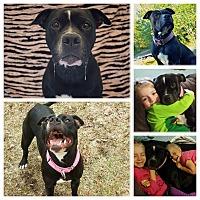 Adopt A Pet :: Athena - Anchorage, AK