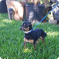 Adopt A Pet :: MARS - Houston, TX
