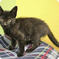 Adopt A Pet :: Manny - Benbrook, TX