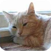 Adopt A Pet :: Bobby (& Emily) - Portland, OR