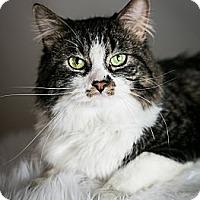 Adopt A Pet :: Howard - Eagan, MN