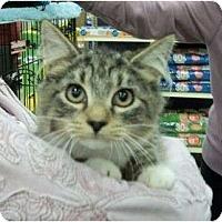 Adopt A Pet :: Chad - Reston, VA