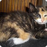 Adopt A Pet :: Gidget - Richmond, VA