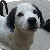 Adopt A Pet :: Kelly*ADOPTED!* - Chicago, IL