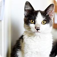 Adopt A Pet :: Ivan - Xenia, OH