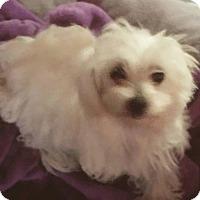 Adopt A Pet :: Robbie - Covina, CA