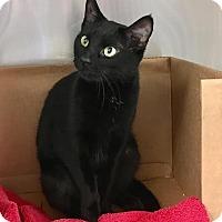 Adopt A Pet :: Jade - East Brunswick, NJ