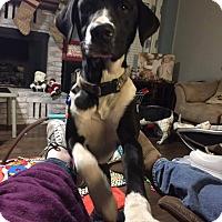Adopt A Pet :: rambo - bullard, TX