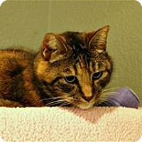 Adopt A Pet :: Carly - Lincoln, CA