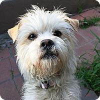 Adopt A Pet :: Brinkley - Los Angeles, CA