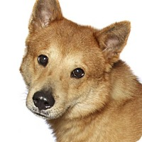 Adopt A Pet :: Ed - oakland park, FL
