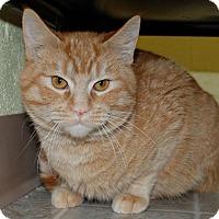 Adopt A Pet :: Fireball - Salem, WV