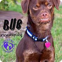 Adopt A Pet :: Bub - Newport, KY