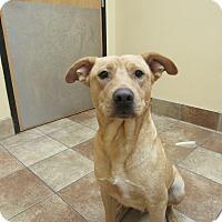 Adopt A Pet :: Colette - Appleton, WI