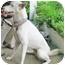 Photo 2 - Husky/Siberian Husky Mix Dog for adoption in Ashland, Oregon - Sophie