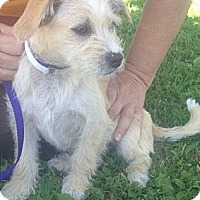 Adopt A Pet :: Finnegan - Oceanside, CA