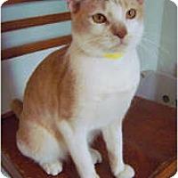 Adopt A Pet :: Lord Butterworth - Shelton, WA