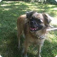 Adopt A Pet :: Priscilla - West Hills, CA
