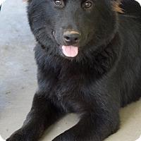 Adopt A Pet :: Kaia - Homewood, AL