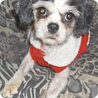 Adopt A Pet :: Cuddles - Foster, RI