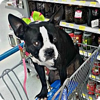 Adopt A Pet :: Princess Oreo - Adoption Pend - Greensboro, NC