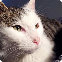 Adopt A Pet :: Prince - Berkeley Hts, NJ