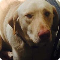 Adopt A Pet :: Bubba - St. Francisville, LA