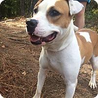 Adopt A Pet :: Siri - Hamilton, GA