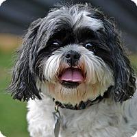 Adopt A Pet :: Sophie - Southington, CT
