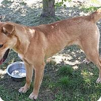 Adopt A Pet :: Bella - Plainfield, IL