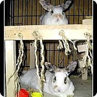 Adopt A Pet :: Twinkles & Sprinkles - Williston, FL