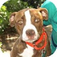 Adopt A Pet :: Missy - Mission Viejo, CA