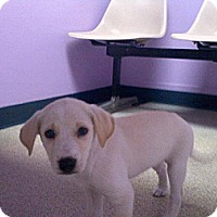 Adopt A Pet :: Peaches ~ Adoption Pending - Youngstown, OH