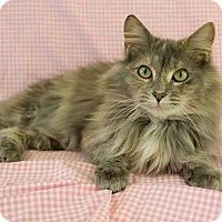 Adopt A Pet :: Nikki - Lancaster, MA