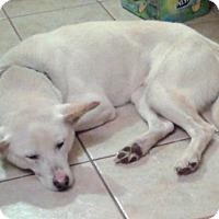 Adopt A Pet :: Elliot - Northumberland, ON