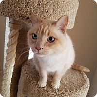 Adopt A Pet :: Sterling - Denver, CO