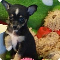 Adopt A Pet :: Feather - Vacaville, CA