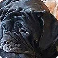 Adopt A Pet :: Greta - Charlotte, MI