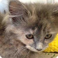 Adopt A Pet :: PUFF - Pittsburgh, PA