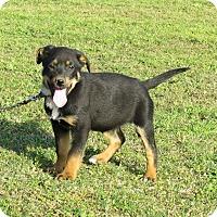 Adopt A Pet :: ZITTA - Bedminster, NJ
