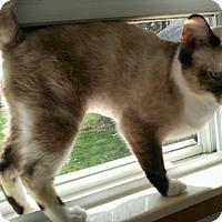 Adopt A Pet :: Penelope - Warren, MI