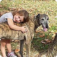 Adopt A Pet :: Dodgem Shoes - Vidor, TX